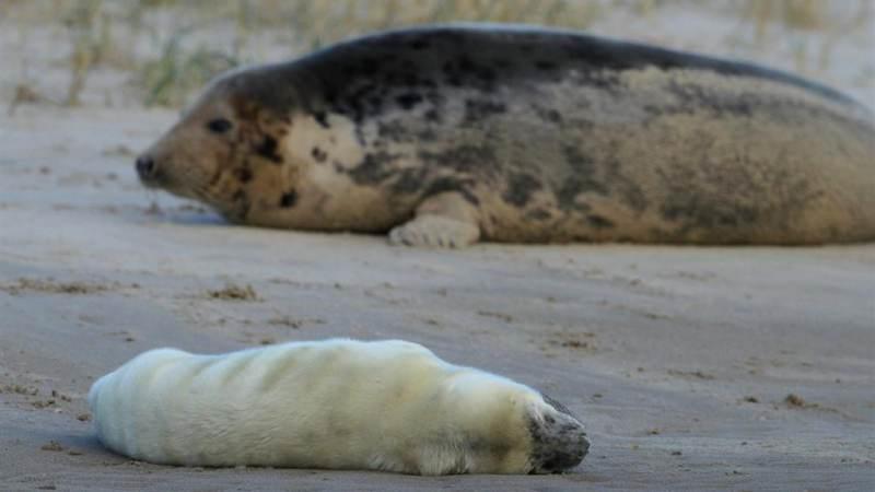 Campagne over zeehondenpups een succes