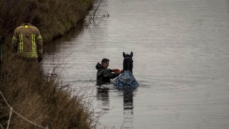 Paard in de sloot op de Drieëndijk in Heenvliet