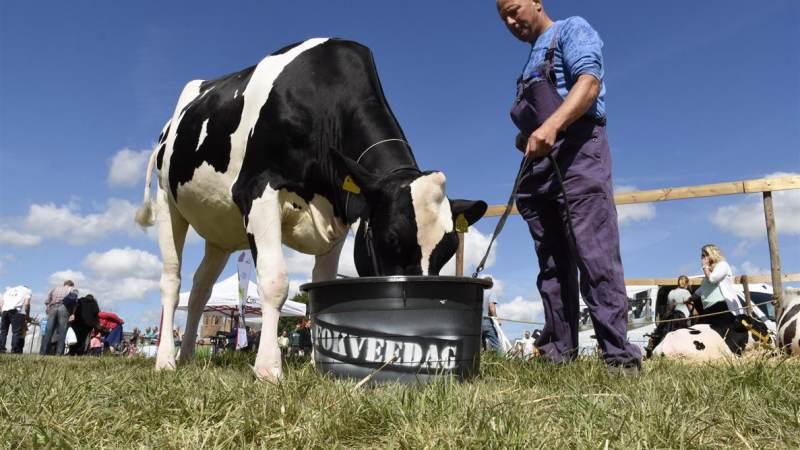 Wie wordt de mooiste koe van de Z-H Eilanden?