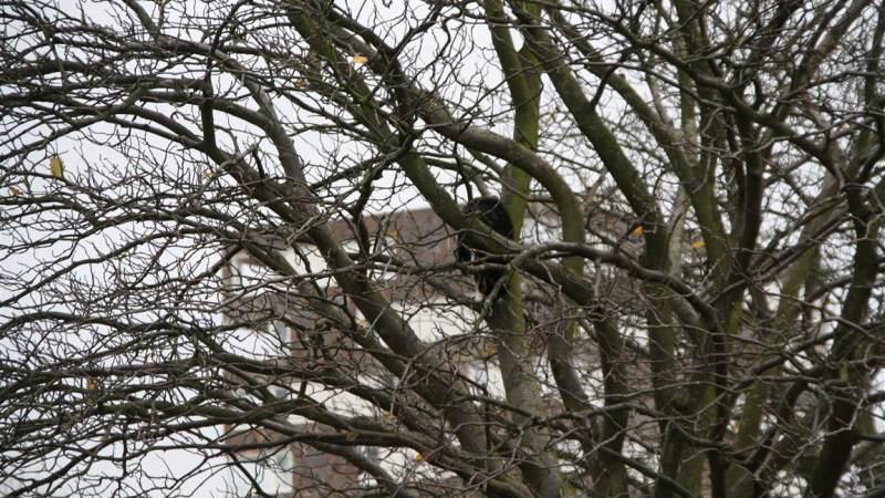 Kat springt uit boom bij reddingsactie