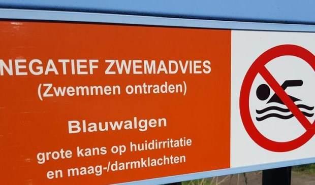 Blauwalg Bernisse Abbenbroek Oostzijde