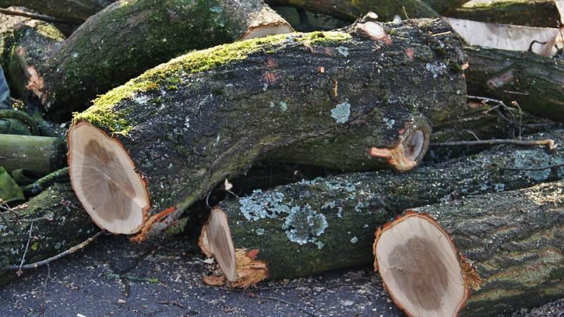 Onderzoek gestart naar aantal bomen in Spijkenisse