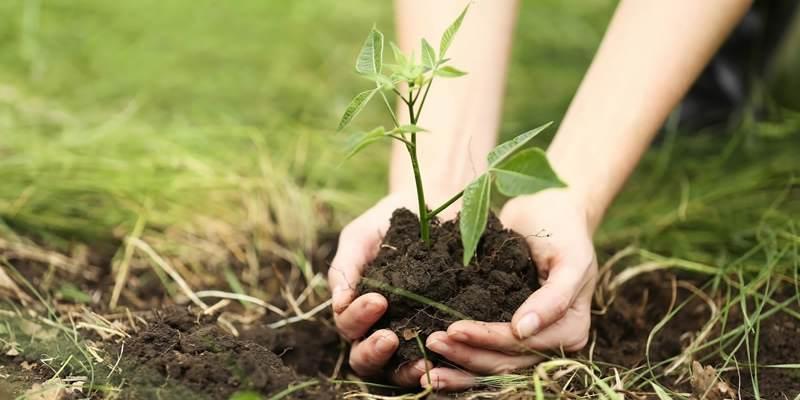 Tweede Paasdag; boomplantdag in Rockanje!